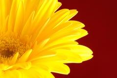 kwiatu kolor żółty Zdjęcia Royalty Free