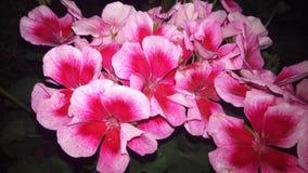 Kwiatu kolor Fotografia Stock