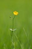 kwiatu kolor żółty Fotografia Royalty Free