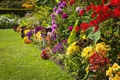 kwiatu kolorowy ogród Obrazy Royalty Free