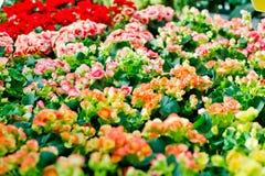 Kwiatu kolorowy tło Obrazy Stock