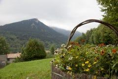 Kwiatu kosz Zdjęcia Stock