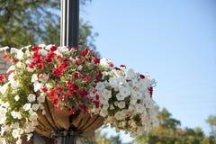 Kwiatu kosz na lekkim słupie Obraz Stock
