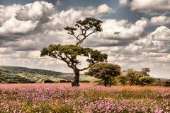 Kwiatu krajobraz zdjęcie stock
