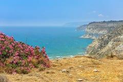 Kwiatu krzak na dennym wybrzeżu Obraz Royalty Free