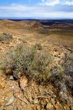 Kwiatu krzaka powulkanicznej skały kamienia Spain roślina fotografia stock