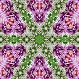 Kwiatu kwadrat, linie, wzór od płytek i granica w i, menchiach, zieleni i lilas, Zdjęcia Stock