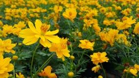 Kwiatu kwiat Zdjęcie Royalty Free