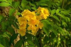Kwiatu kwiat na pięknym ranku obrazy royalty free