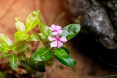Kwiatu kwiat plenerowy Obrazy Royalty Free