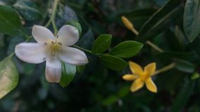 2 kwiatu zdjęcie stock