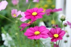 Kwiatu kwitnienie Obraz Royalty Free