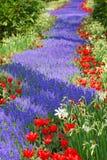 kwiatu ślad Obrazy Royalty Free