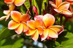 kwiatu lan thom Obrazy Royalty Free