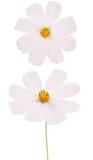 kwiatu lato Zdjęcie Royalty Free
