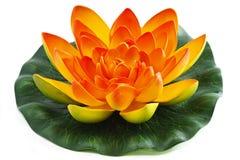 kwiatu lelui woda Zdjęcie Stock