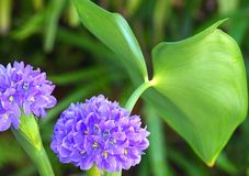 kwiatu liść Obraz Stock