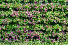 Kwiatu liścia krzaków zieleni ogrodzenie Fotografia Royalty Free