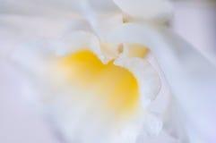 kwiatu lilly macro Zdjęcia Royalty Free