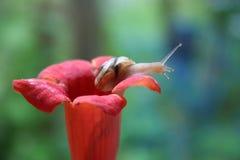 kwiatu ślimaczek Obrazy Stock