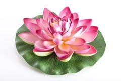 kwiatu lotosu klingeryt zdjęcia royalty free