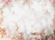 Kwiatu miękki tło w pastelowym brzmieniu dla valentine lub ślubu Rocznik wiosny kwiatu tło Kwiatu projekta szablon zdjęcie stock