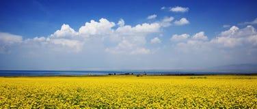 kwiatu morze Obrazy Royalty Free