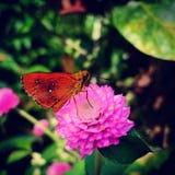 Kwiatu motyl makro- obrazy royalty free