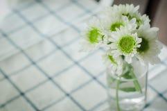Kwiatu mum Zdjęcie Royalty Free