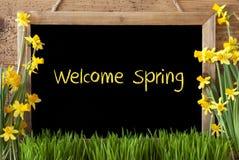 Kwiatu narcyz, Chalkboard, tekst Mile widziany wiosna Zdjęcia Stock