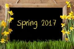 Kwiatu narcyz, Chalkboard, tekst wiosna 2017 Obrazy Stock