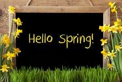 Kwiatu narcyz, Chalkboard, tekst wiosna Cześć Zdjęcia Stock