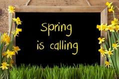 Kwiatu narcyz, Chalkboard, tekst wiosna Dzwoni Obrazy Royalty Free