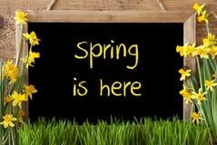 Kwiatu narcyz, Chalkboard, tekst wiosna Jest Tutaj Obrazy Stock