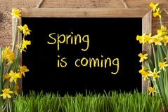 Kwiatu narcyz, Chalkboard, tekst wiosna Przychodzi Zdjęcia Stock