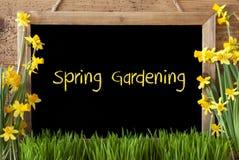 Kwiatu narcyz, Chalkboard, tekst wiosny ogrodnictwo Obrazy Royalty Free
