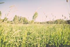 Kwiatu niebieskie niebo z słońcem i pole - rocznika skutek Obraz Stock