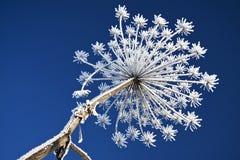 kwiatu śnieg Zdjęcia Royalty Free