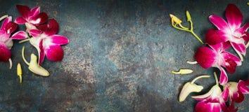 Kwiatu nieociosany tło z storczykowymi kwiatami zdjęcia stock