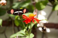 Kwiatu obsiadanie na kwiacie obrazy stock