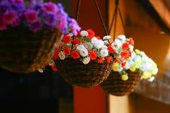 Kwiatu obwieszenie Zdjęcia Royalty Free