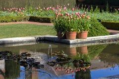 Kwiatu odbicie Obraz Royalty Free