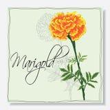 kwiatu odosobniony nagietka biel royalty ilustracja