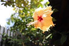 kwiatu odosobniony nagietka biel obrazy stock
