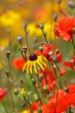 kwiatu ogród Zdjęcia Royalty Free