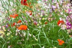 kwiatu ogród fotografia royalty free