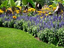 kwiatu ogród Zdjęcie Royalty Free