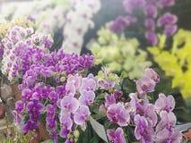 Kwiatu ogród dla abstrakcjonistycznego tła Zdjęcie Stock