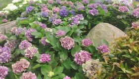 Kwiatu ogród dla abstrakcjonistycznego tła Obrazy Royalty Free