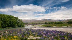 Kwiatu ogród, Południowa wyspa, Nowa Zelandia Fotografia Royalty Free
